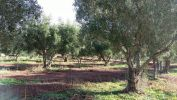 For sale Agricultural domain Casablanca Centre ville